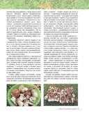 Грибы. Иллюстрированная энциклопедия. Собираем и готовим — фото, картинка — 9