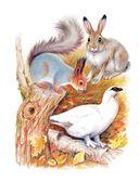 Сказки лесной опушки — фото, картинка — 2