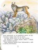 Сказки лесной опушки — фото, картинка — 11
