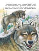 Сказки лесной опушки — фото, картинка — 10