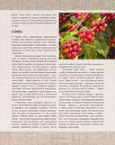 Большая книга кофе (Мешковина) — фото, картинка — 8