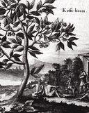 Большая книга кофе (Мешковина) — фото, картинка — 9