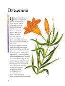 Рисуем цветы акварелью. Пошаговое руководство от итальянского мастера — фото, картинка — 5