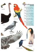 Птицы — фото, картинка — 5