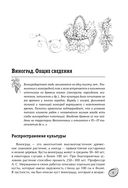 Большая энциклопедия виноградаря — фото, картинка — 5