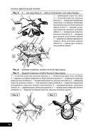 Анатомия человека — фото, картинка — 11