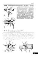 Анатомия человека — фото, картинка — 12
