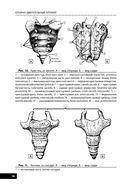 Анатомия человека — фото, картинка — 13