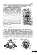 Анатомия человека — фото, картинка — 14