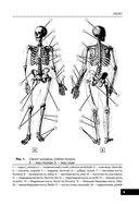Анатомия человека — фото, картинка — 8