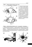 Анатомия человека — фото, картинка — 10