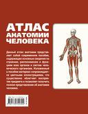 Атлас анатомии человека — фото, картинка — 16