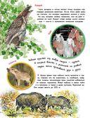 О животных и растениях — фото, картинка — 5