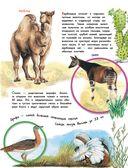 О животных и растениях — фото, картинка — 6