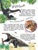 О животных и растениях — фото, картинка — 7