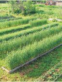 Новая энциклопедия садовода и огородника — фото, картинка — 6