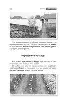 Огород. Как я выращиваю здоровые овощи — фото, картинка — 9