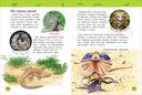 Удивительные животные. Энциклопедия для детского сада — фото, картинка — 2