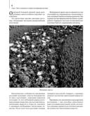 Комплект. Луковичные цветы. Выбираем, выращиваем, наслаждаемся (+ семена) — фото, картинка — 3