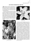 Комплект. Луковичные цветы. Выбираем, выращиваем, наслаждаемся (+ семена) — фото, картинка — 4