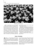 Комплект. Луковичные цветы. Выбираем, выращиваем, наслаждаемся (+ семена) — фото, картинка — 5