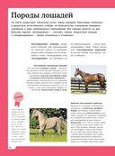 Лошади. Полная энциклопедия — фото, картинка — 10