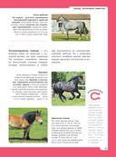 Лошади. Полная энциклопедия — фото, картинка — 11