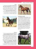 Лошади. Полная энциклопедия — фото, картинка — 13