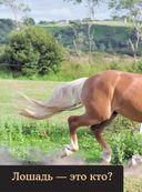 Лошади. Полная энциклопедия — фото, картинка — 6