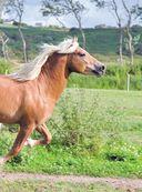 Лошади. Полная энциклопедия — фото, картинка — 7