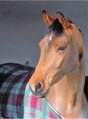 Лошади. Полная энциклопедия — фото, картинка — 8