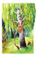 Лесной голосок — фото, картинка — 4
