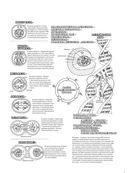 Физиология человека: атлас-раскраска — фото, картинка — 15