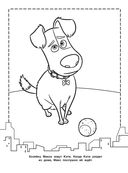 Тайная жизнь домашних животных. Раскраска (оранжевая) — фото, картинка — 3