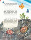 Жизнь замечательных растений — фото, картинка — 11