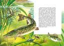 Жизнь в пресной воде — фото, картинка — 2