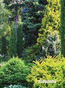 Ландшафтный дизайн. Своими руками - от проекта до воплощения — фото, картинка — 9