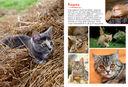 Моя большая книга о животных — фото, картинка — 3