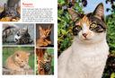 Моя большая книга о животных — фото, картинка — 4