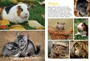 Моя большая книга о животных — фото, картинка — 5