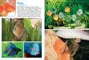 Моя большая книга о животных — фото, картинка — 6