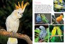 Моя большая книга о животных — фото, картинка — 7