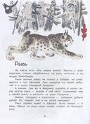 Это всё кошки — фото, картинка — 6