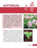 Картофель и капуста. Секреты урожая от Октябрины Ганичкиной — фото, картинка — 4