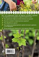 Садовая обрезка для богатого урожая — фото, картинка — 4