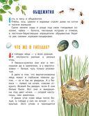 Рассказы и сказки о природе — фото, картинка — 11