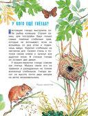 Рассказы и сказки о природе — фото, картинка — 9