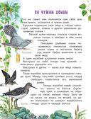 Рассказы и сказки о природе — фото, картинка — 10