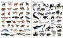 1000 Animals — фото, картинка — 1