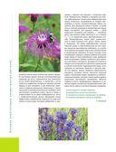 Лекарственные растения. Большая иллюстрированная энциклопедия — фото, картинка — 12